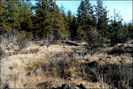 lot#49.21b Oregon Land