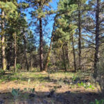 Lot No. 13.132 klamath oregon land for sale